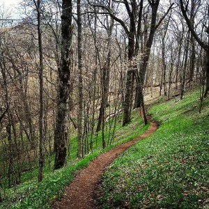 modern_day_mountain_manLast time I walked through here, the white in the trees was ice. Now it's flowers. #seasons #change #AppalachianTrail2016 #hiking #nature #green #alive