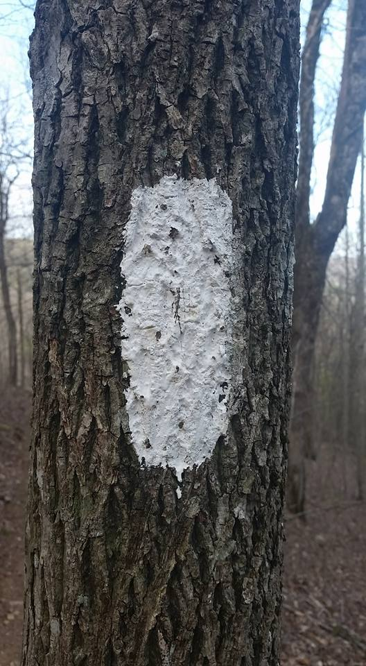 165,000 - Approximate number of white blazes on the Appalachian Trail, according to the Georgia Appalachian Trail Club. To check out more photos click here.