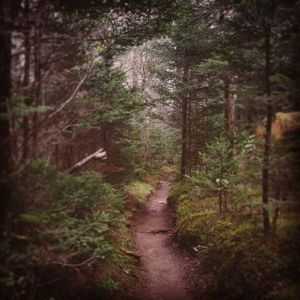 """""""The woods are lovely, dark, and deep, But I have promises to keep, And miles to go before I sleep, And miles to go before I sleep."""" - Robert Frost, 1923 #AppalachianTrail2016 #yearofadventure #exploring #backpacking #whiteblazers #optoutside #mountains #nature #findyourpark #nationalparks #smokies #forest #trail — at Great Smoky Mountains."""