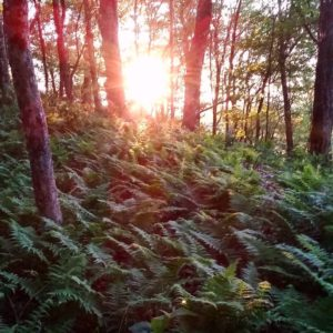 modern_day_mountain_manNew life at last light. #AppalachianTrail2016 #ferns #exploring #backpacking #nature #hiking #beauty #sunset